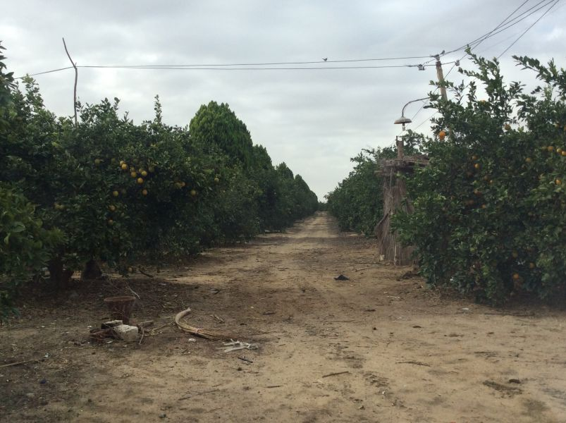 Farms of Orange Cairo Alex Desert Road For Sale | Egypt