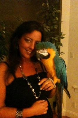 Blue and Gold  beauty female Macaw ready to meet you.