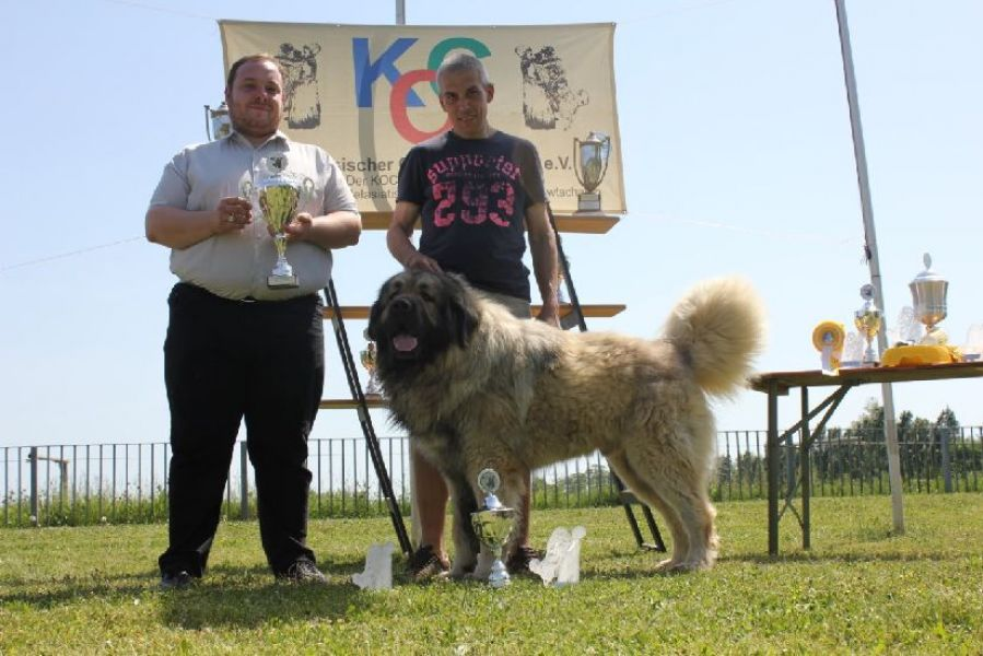 Caucasian Shepherd dog - pupps FCI pedigree