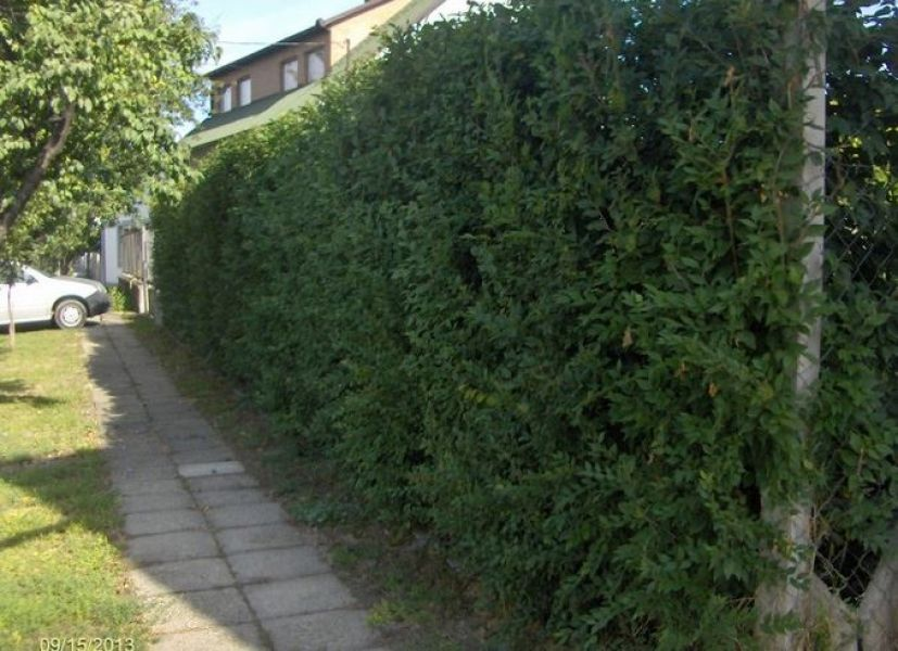 Privacy Hedges for Sale