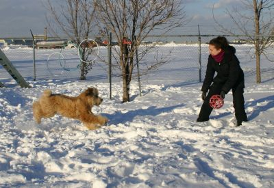 Boarding & Grooming DOGS and CATS in the West Island of Montreal