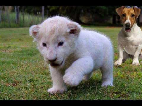 Adorable cubs for sale