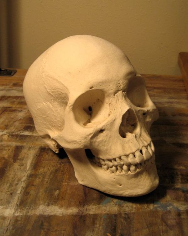 Some real human skulls and bones for sale