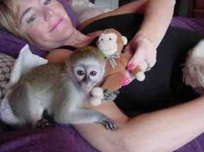 two lovely capuchin monkey ready for adoption