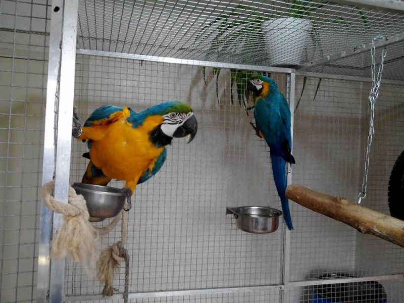 Hand fed, tamed, trained babies and adults parrots and fertilized eggs for sale.